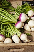 Fresh May turnips