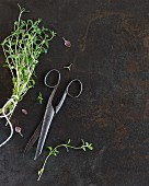 Freshly thyme with an old pair of scissors (seen from above)