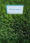 Barley grass with a sign