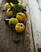 Fresh quinces on a wooden surface
