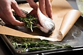 Seabass being stuffed with herbs