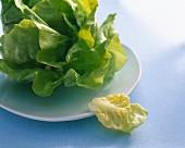 Kopfsalat mit einzelnem Blatt