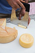 South Tyrol, organic farm, organic cheese from the Englhorn dairy in Schleis