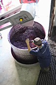 Rotweinmaische wird gerührt
