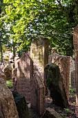 Ort der Ruhe: der Jüdischer Friedhof in Prag