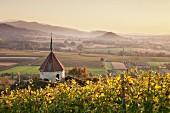 Blick über Ehrenstetten von der Ölbergkapelle zur Burg Staufen, Breisgau, Markgräflerland, Schwarzwald, Baden-Württemberg, Deutschland, Europa