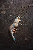 A blue prawn