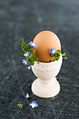 An organic egg in an egg cup with speedwell