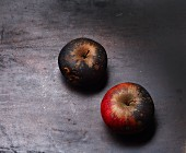 Two mouldy apples on a black baking tray