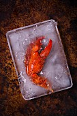Cooked lobster claws in a container of ice