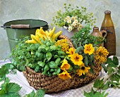 An arrangement of fresh herbs and edible flowers in a wicker basket