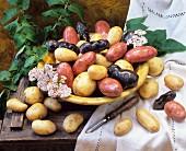 Stillleben mit verschiedenen Kartoffelsorten