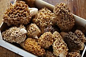 A crate of freshly harvest morel mushrooms
