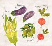 an arrangement of vegetables featuring corn, aubergines, radishes and olives (illustration)