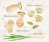 An arrangement of spring onions and various mushrooms (ilustration)