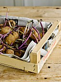 A crate of old sprouting potatoes
