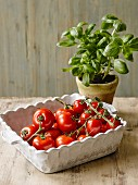 Tomatoes in a porcelain dish and a pot of basil