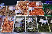 Verschiedene Garnelen, Langustinen, Venusmuscheln, Strandschnecken auf dem Fischmarkt in Bilbao, Baskenland, Spanien