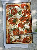 A summer pizza with tomatoes and capers