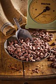 A dish of cocoa beans and a scoop in front of a pair of scales and a jute sack