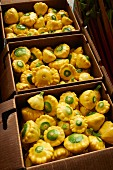 Yellow patty pan squash in cardboard cartons