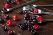Freshly picked red and black wild raspberries on silver spoons on a wooden surface