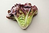 Batavia lettuce on a white surface