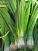 Bundles of spring onions at a market