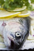 Fresh rainbow trout with lemon, lime and chervil (close-up)