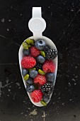 Blackberries, raspberries, blueberries and pistachios on a white enamel spoon