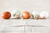 A row of various eggs