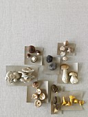 Various wild mushrooms