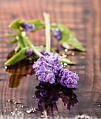 Lavender flowers on wet wooden surface