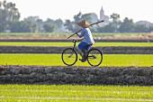 Reisbauer fährt mit Fahrrad durch Reisfelder (Vercelli, Piemont, Italien)