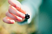 A child holding a blackberry (close-up)