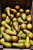 Obstkiste mit reifen Birnen