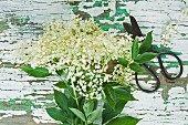 Elderflowers and a pair of scissors on a wooden table
