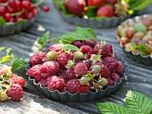 Freshly picked raspberries in flan tin