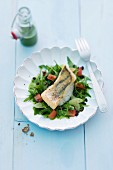 Zander fillet on a rocket salad
