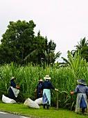 Einheimische Frauen bei der Feldarbeit