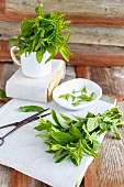 Fresh mint in a mug and on a piece of paper with leaves chopped off