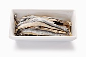 Sardine fillets preserved in oil in a porcelain dish