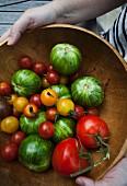 Frauenhände halten Holzschüssel mit verschiedenen Tomatensorten
