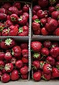 Erdbeeren im Karton auf dem Markt