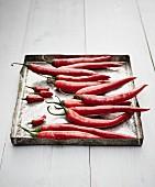 Frische rote Chilischoten auf altem Backblech