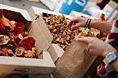 Crates of fresh mushrooms at a market