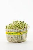Fresh organic cress in a plastic punnet