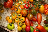 Various types of tomatoes in straw