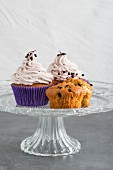 Cupcakes with elderberries with elderberry cream