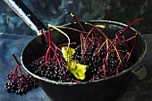 Freshly harvested elderberries in an antique enamel sieve on a black surface